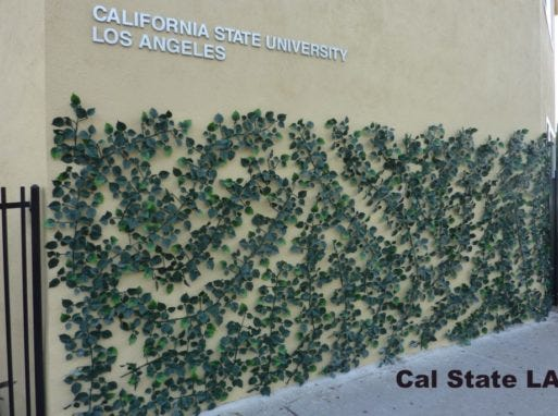 At the California State University Los Angeles campus, the synthetic vines were used to prevent graffiti on the wall of a student living facility on the outskirts of campus.