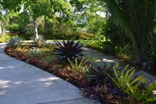 Bromeliads at the Naples Botanical Garden.