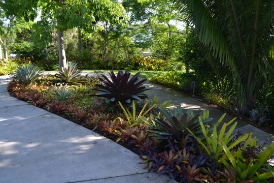 Bromeliads at the Naples Botanical Garden.