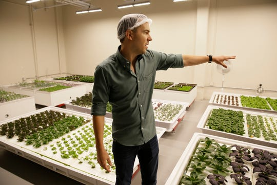 In this Sept. 27 photo, Iron Ox CEO Brandon Alexander looks out at his robotic indoor farm in San Carlos, Calif. Alexander spent a lot of time working his family's farm in Oklahoma before he headed off to the University of Texas to study robotics. After graduating, he moved to Silicon Valley, where he is returning to his roots by building robot farmers that roll maneuver through a suburban warehouse tending to rows of leafy, colorful vegetables that will soon be filling salad bowls in restaurants and eventually may be in supermarket produce aisles, too.
