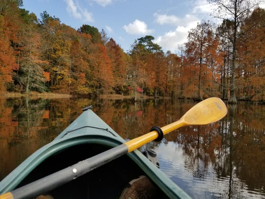 Paddling along at Trap Pond State Park in Fall 2017.