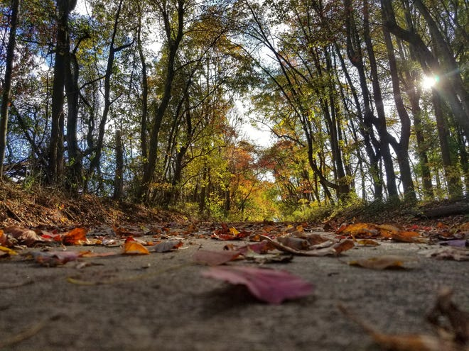 Colorful leaves dot the trail at White Clay Creek State Park in Fall 2017.