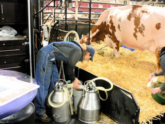 Cows must be milked.