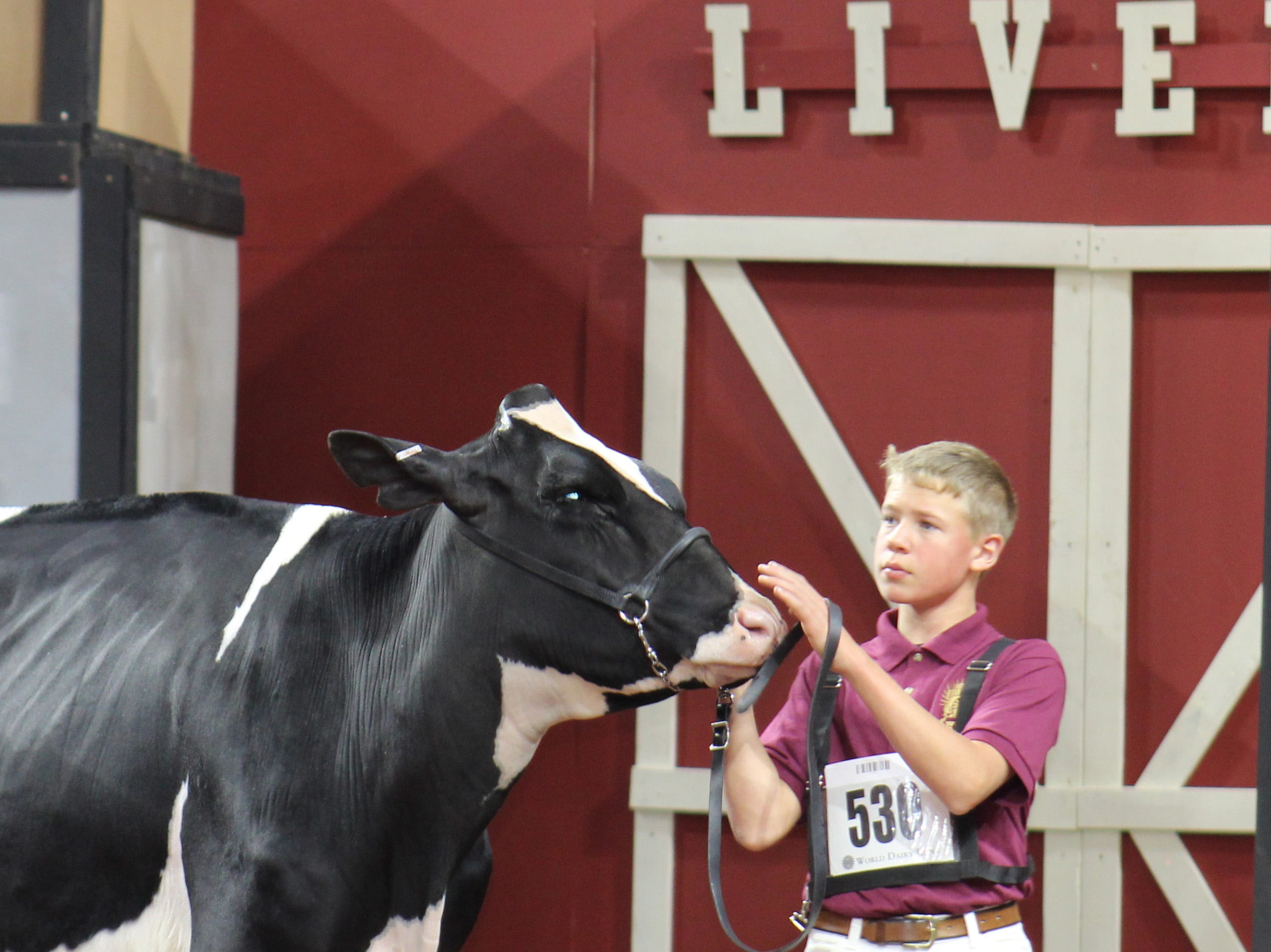 Junior exhibitors had the chance to compete on opening day of World Dairy Expo.