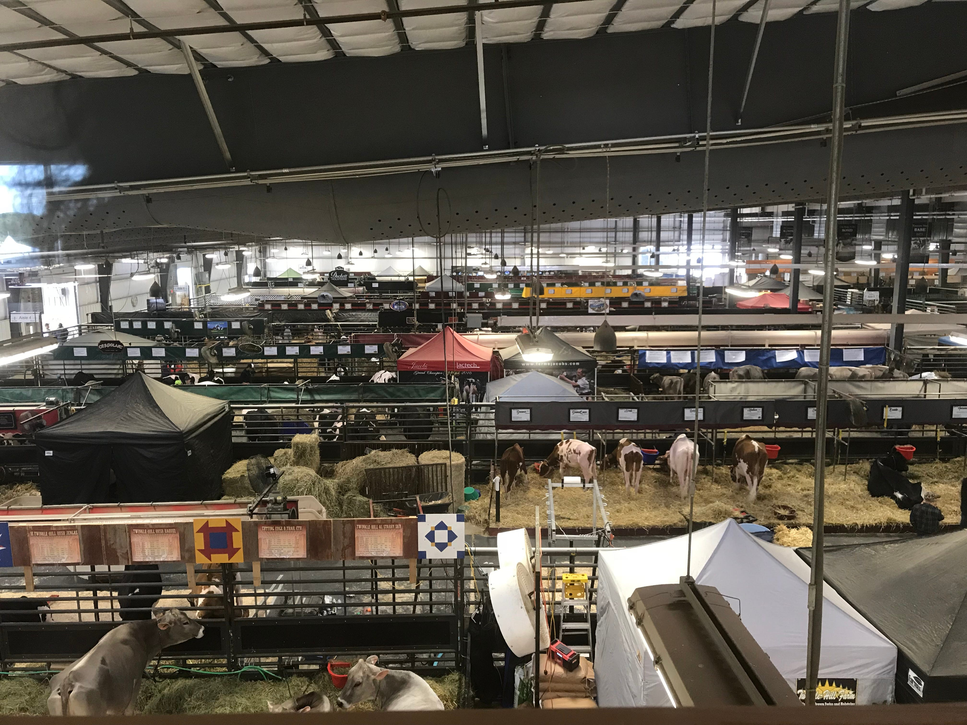A birds-eye view of the cattle displays inside the New Holland Pavilion.