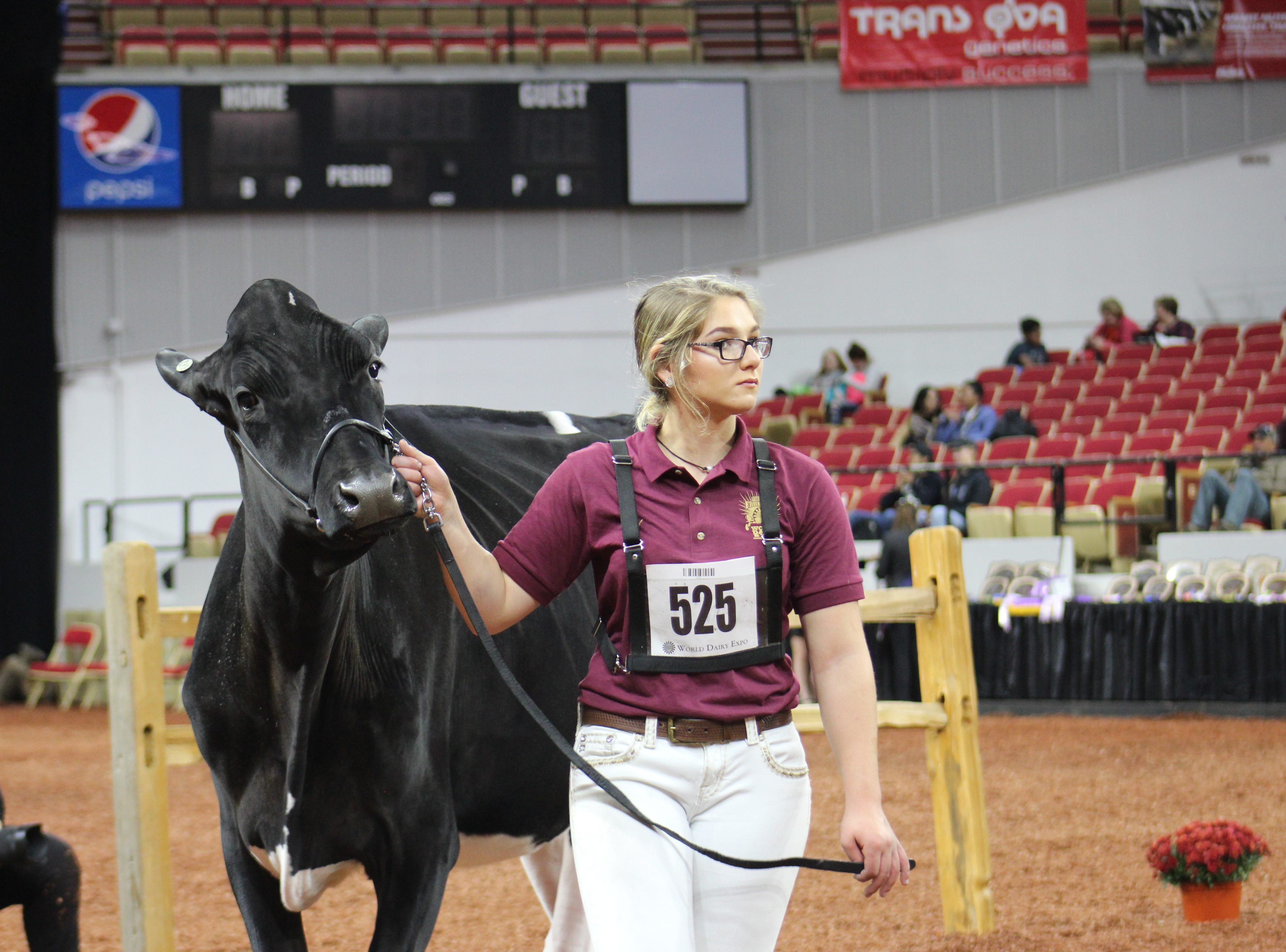 Taking a turn in the show ring.