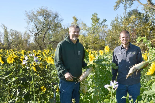 Barry Bubolz (left) NRCS District Conservationist and GLRI Coordinator, with Derek Van De Hey, New Horizon's Dairy, viewing giant cover crop radishes in a mixed cover crop field with sunflowers, peas, tillage radishes, clovers and turnips.