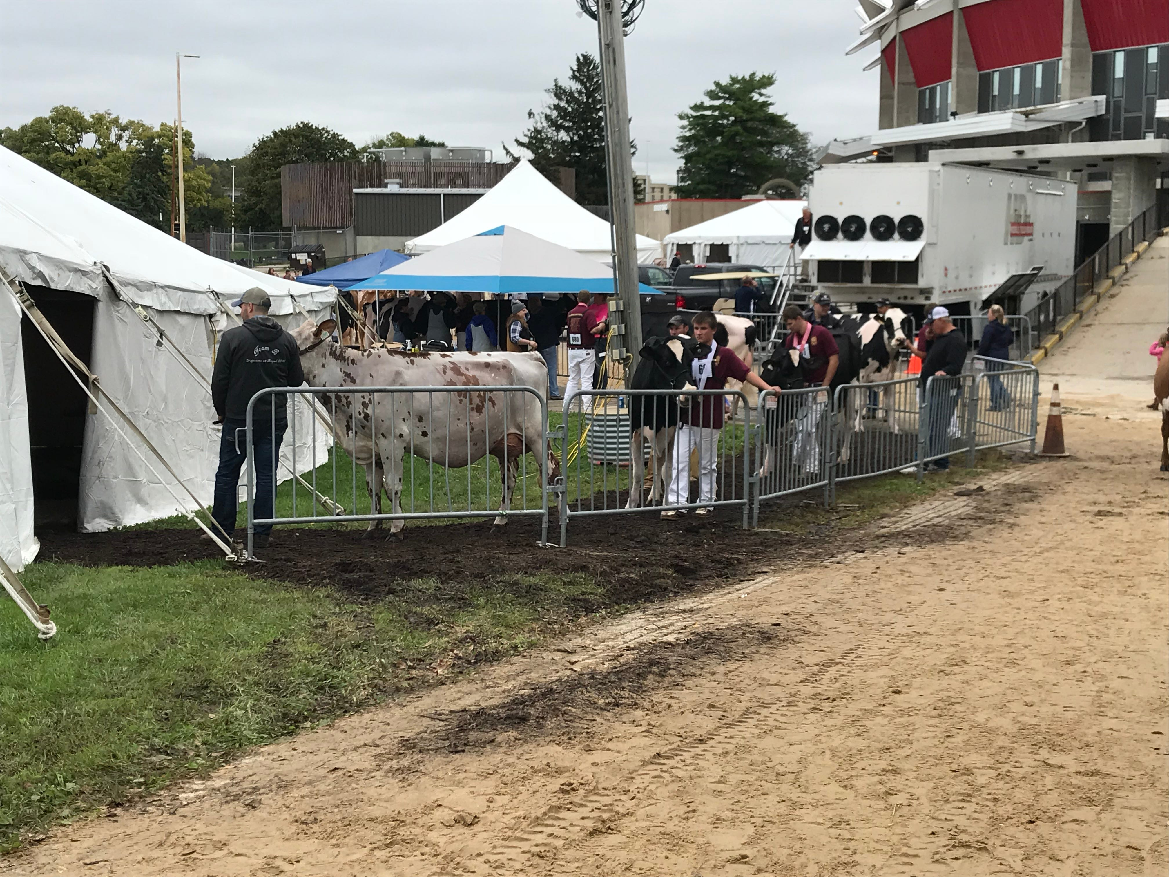 Exhibitors line up to have their photos taken following their stint in the show ring.