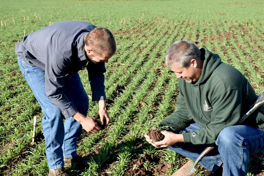 Derek and Barry inspecting cover crop root growth.