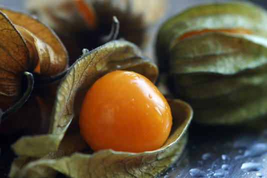 Ground Cherry Physalis Pruinosa