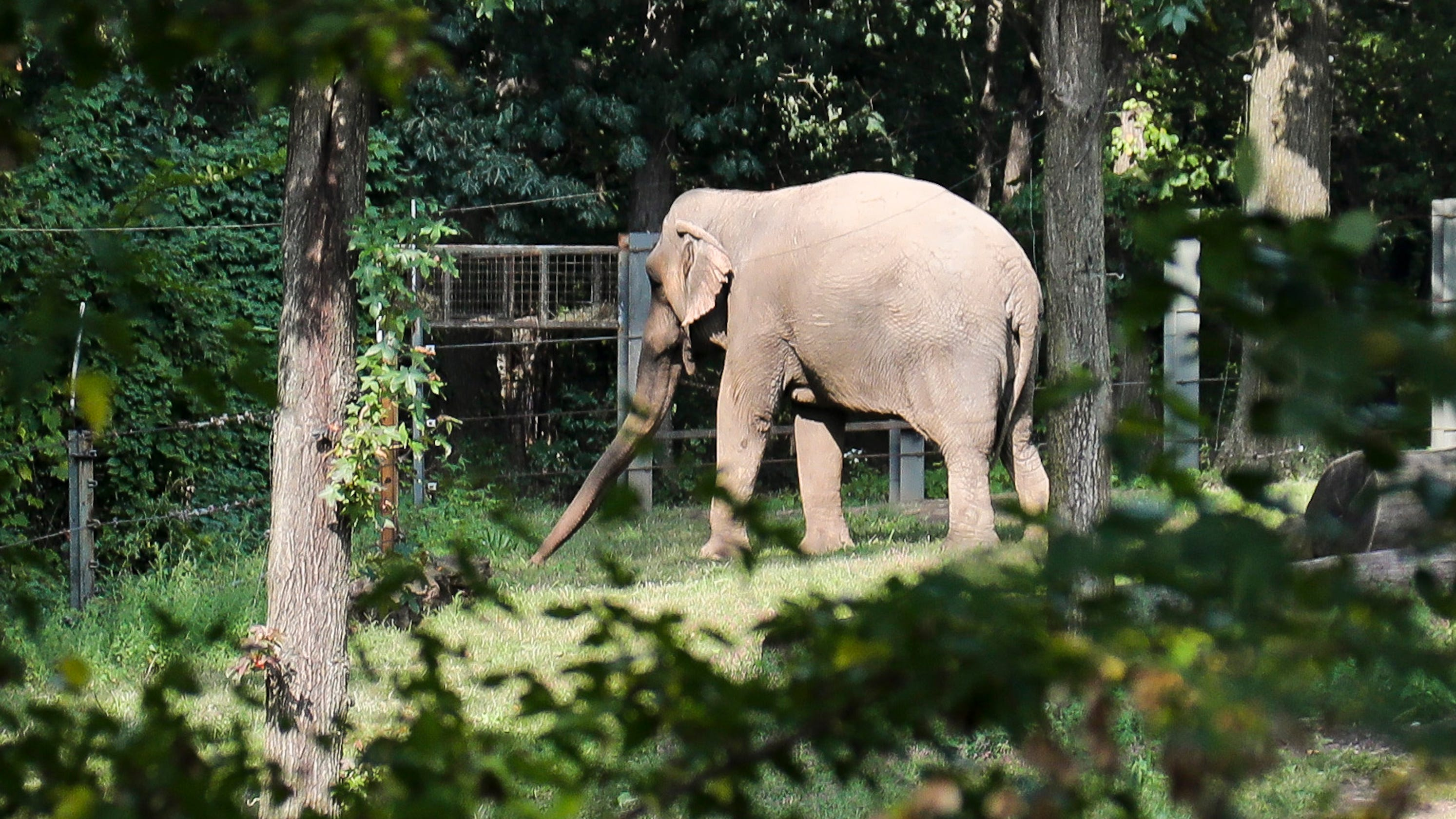 Group Wants Bronx Zoo Elephant Freed Orleans County To Hear Petition
