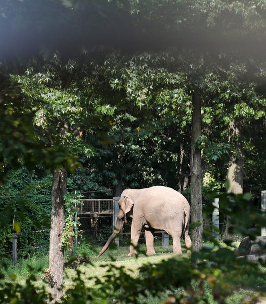 Ap Bronx Zoo Elephant Lawsuit A Usa Ny