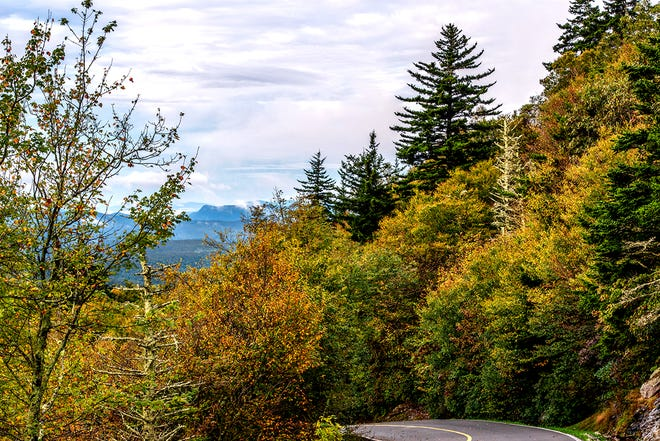 Green turns to gold on the straightaway leading toward Grandfather Mountain's Mile High Swinging Bridge. Fall color is delayed this year, owing to persistent high temperatures.