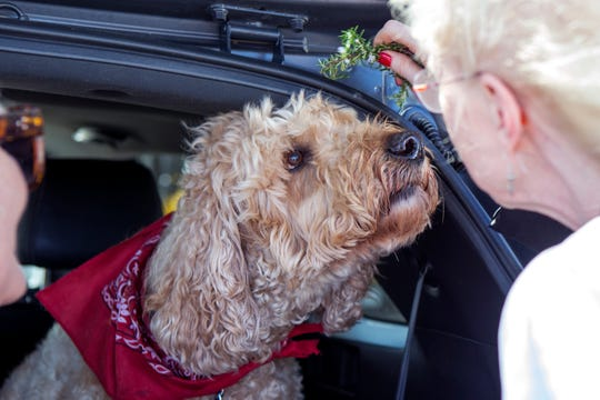 Rev. Cynthia McKenna preside over a pet blessing of Davy during the 2nd annual Drive Thru-Walk up Pet Blessing at All Saints' Episcopal Church on Thursday, October 4, 2018. The Feast Day of St. Francis', is held every year on October 4. Around this day the church celebrate the life and works of St. Francis of Assisi and his love for all God's creatures through the blessing of pets or animals.