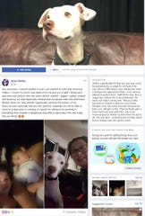 "A screenshot of the Facebook page ""Free Olaff"" with over 500 members and a post from Olaff's owner, Tanya Cardona."