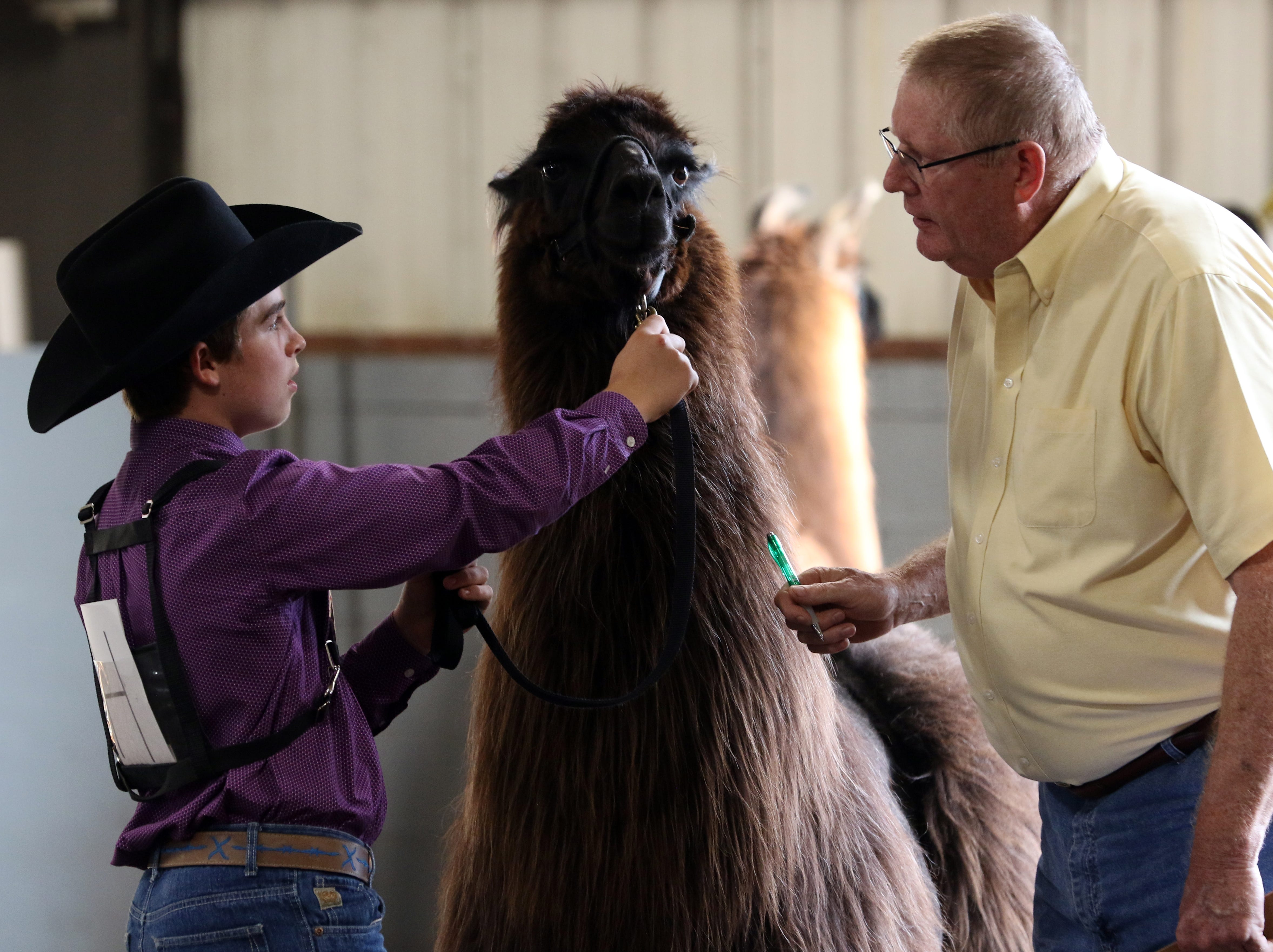 J.D. Herron shows a llama during the Showman of Showmen at the Coshocton County Fair on Wednesday.