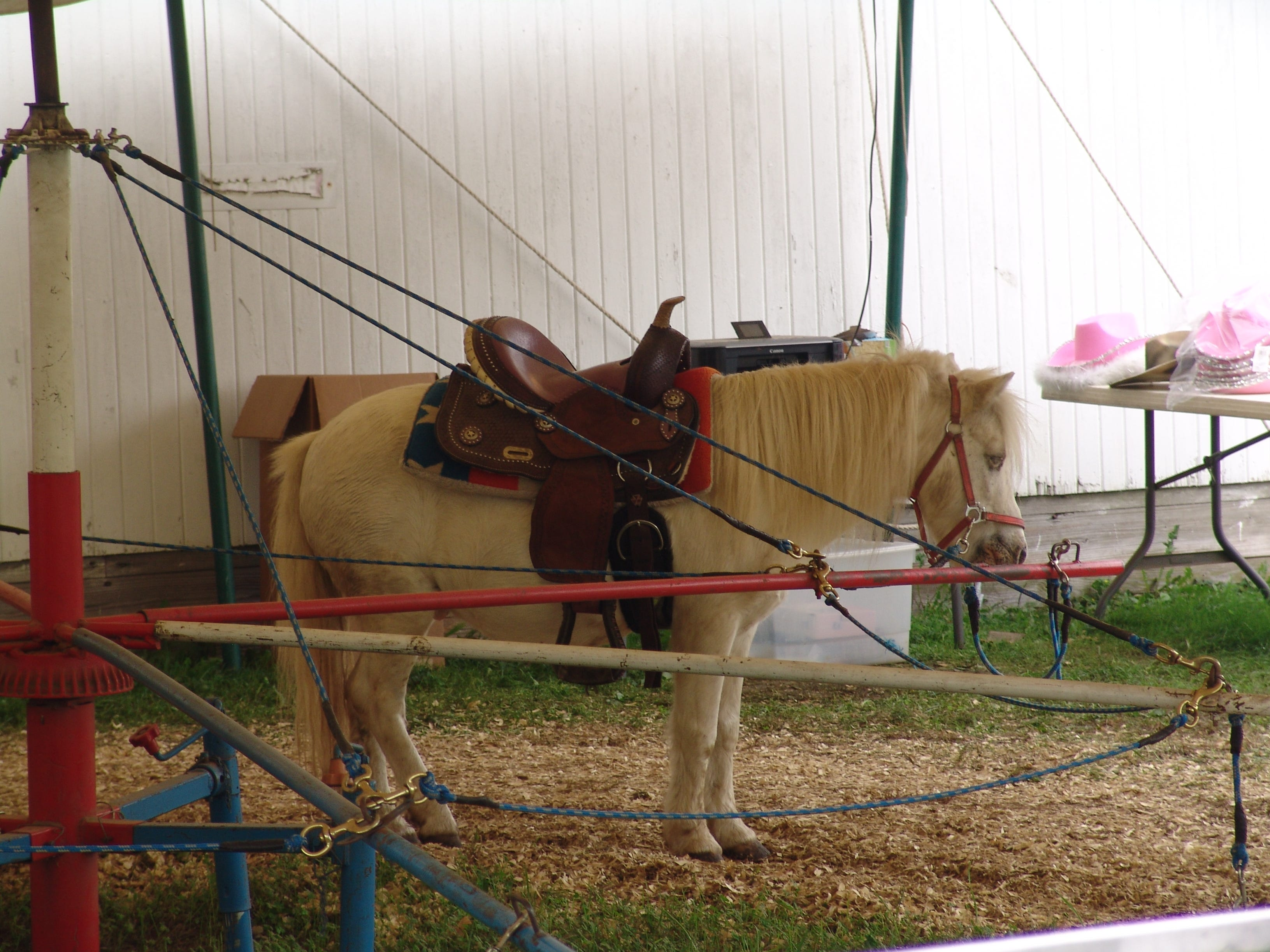 Ponies at the fair.