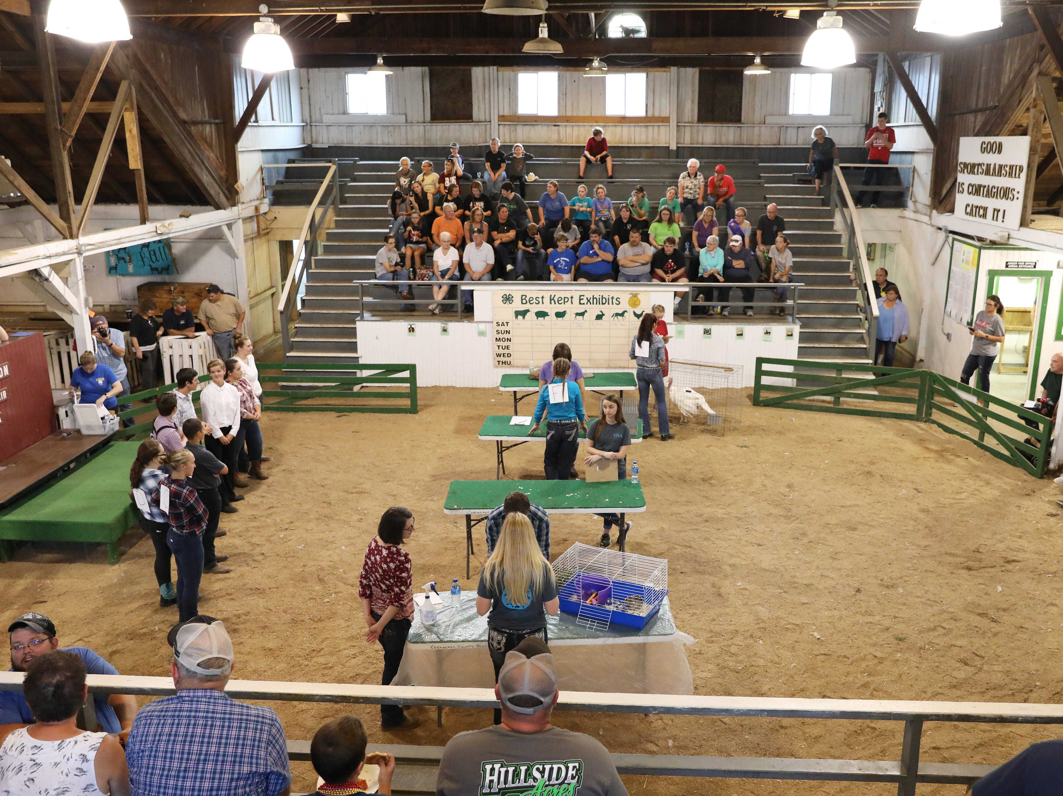 Contestants show small animals in the Junior Fair arena during the Showman of Showmen at the Coshocton County Fair on Wednesday.