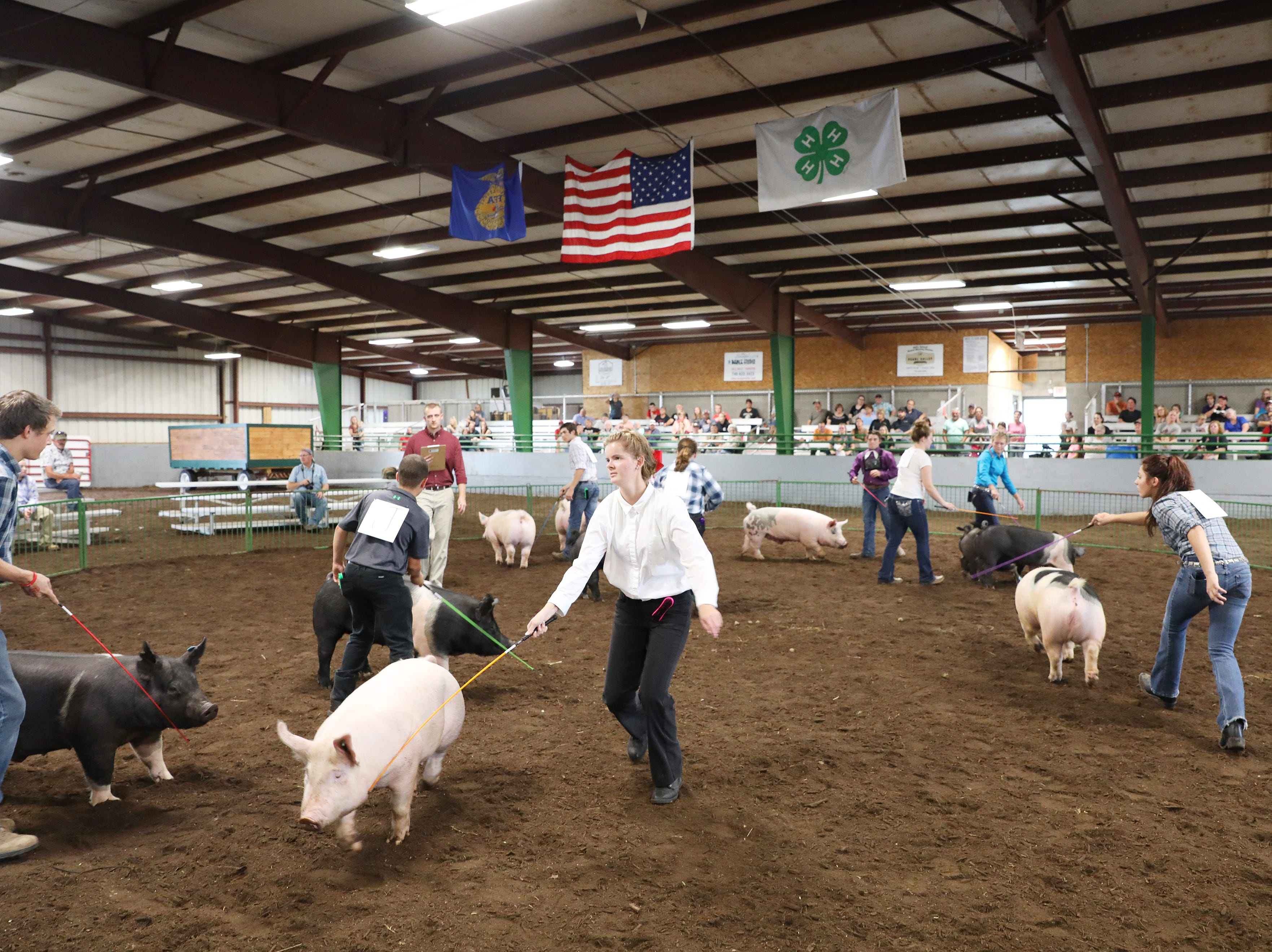 Contestants show hogs during the Showman of Showmen at the Coshocton County Fair on Wednesday.