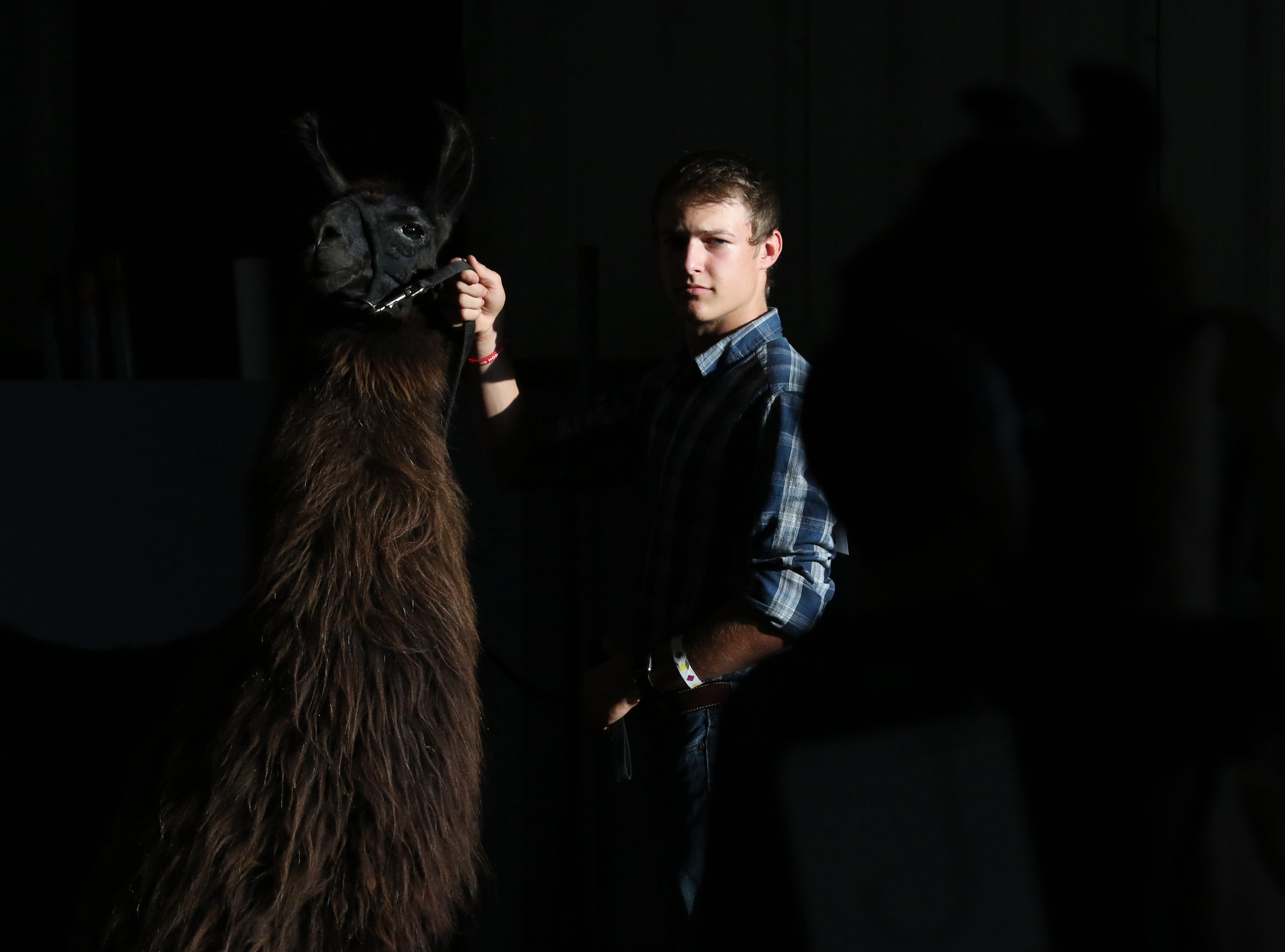 Ty Collins waits to show a llama during the Showman of Showmen at the Coshocton County Fair on Wednesday.