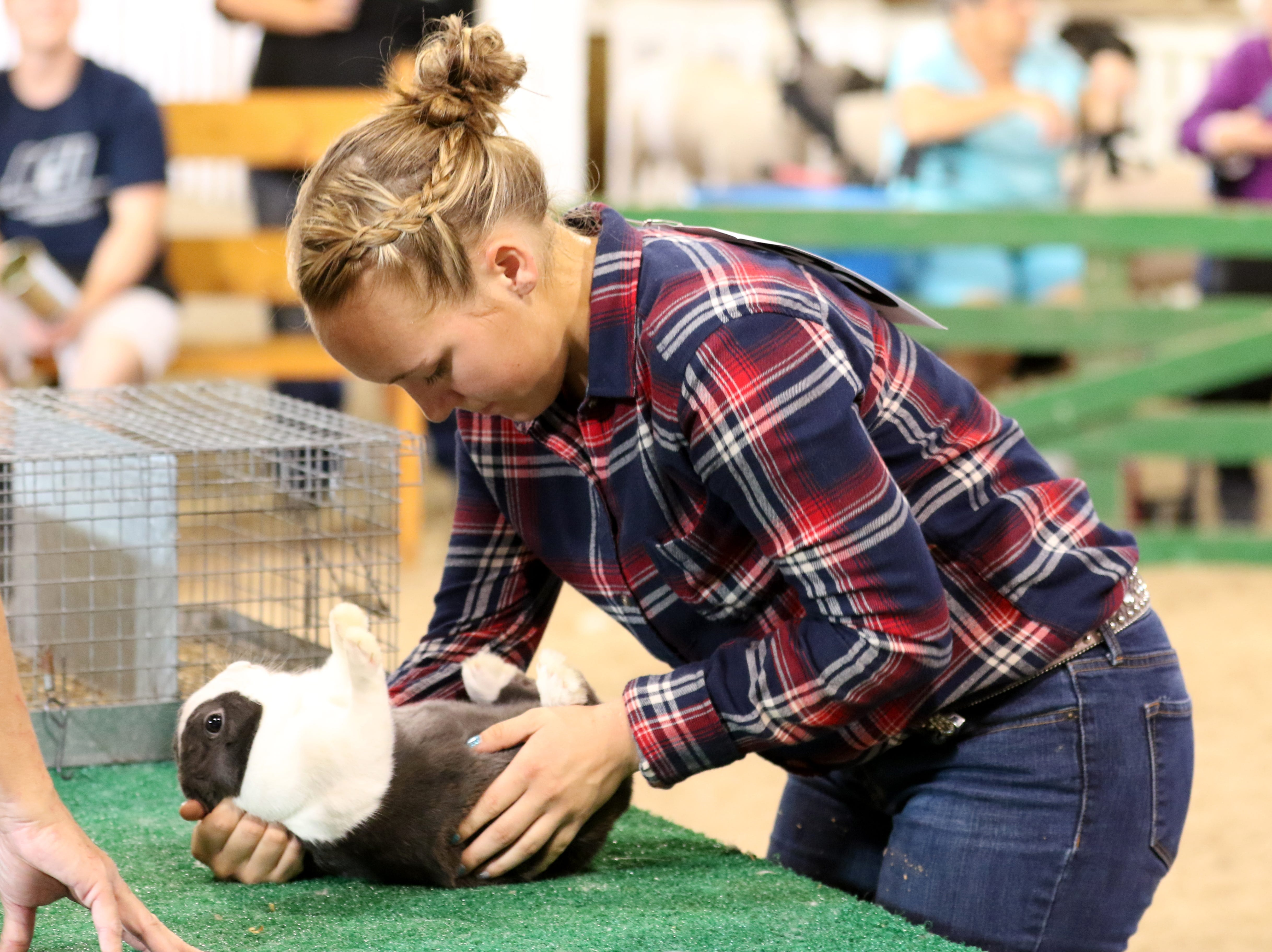 Sydney Zinkon shows a rabbit during the Showman of Showmen at the Coshocton County Fair on Wednesday.