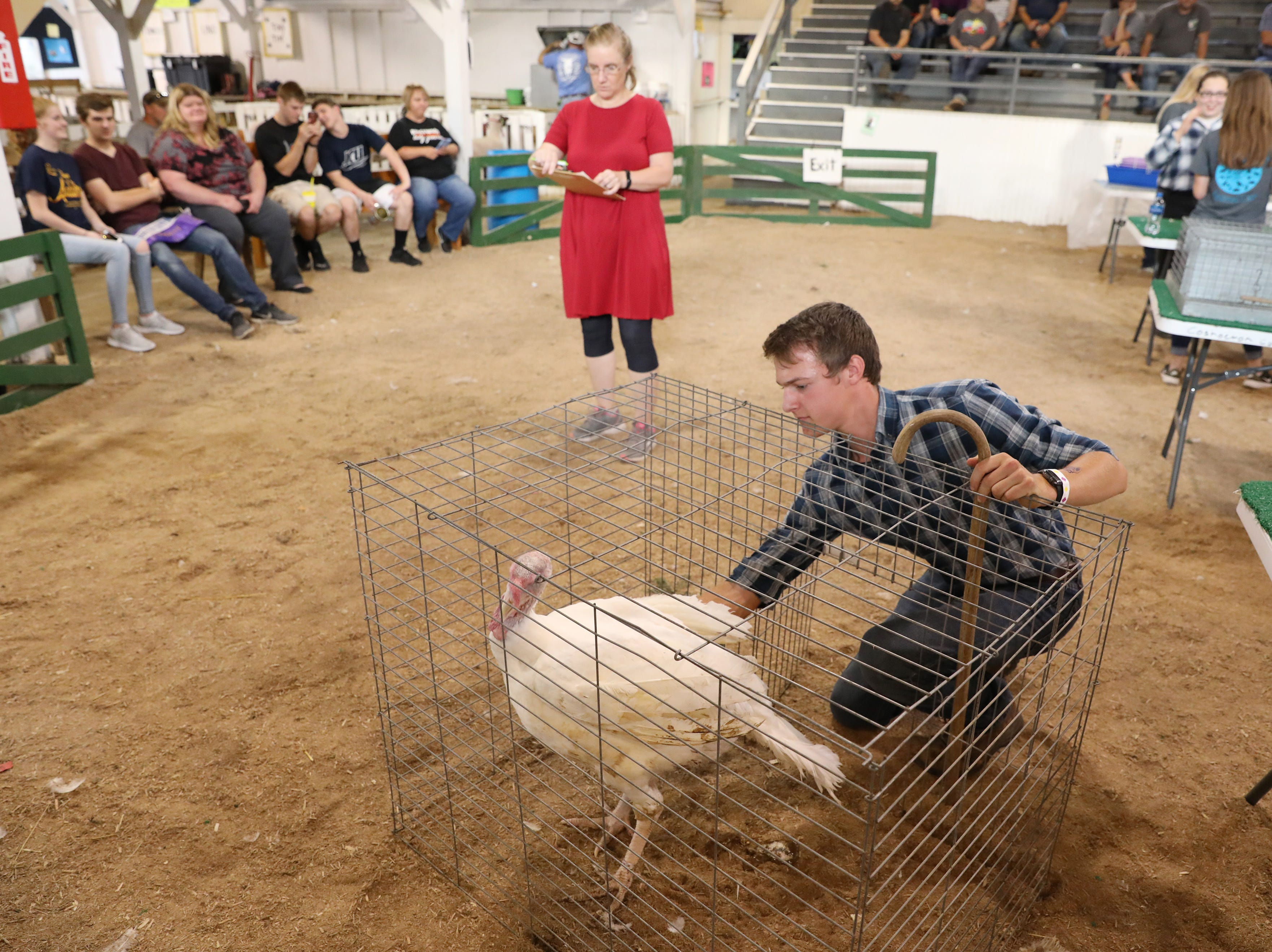 Ty Collins works with a turkey during the Showman of Showmen competition at the Coshocton County Fair on Wednesday.