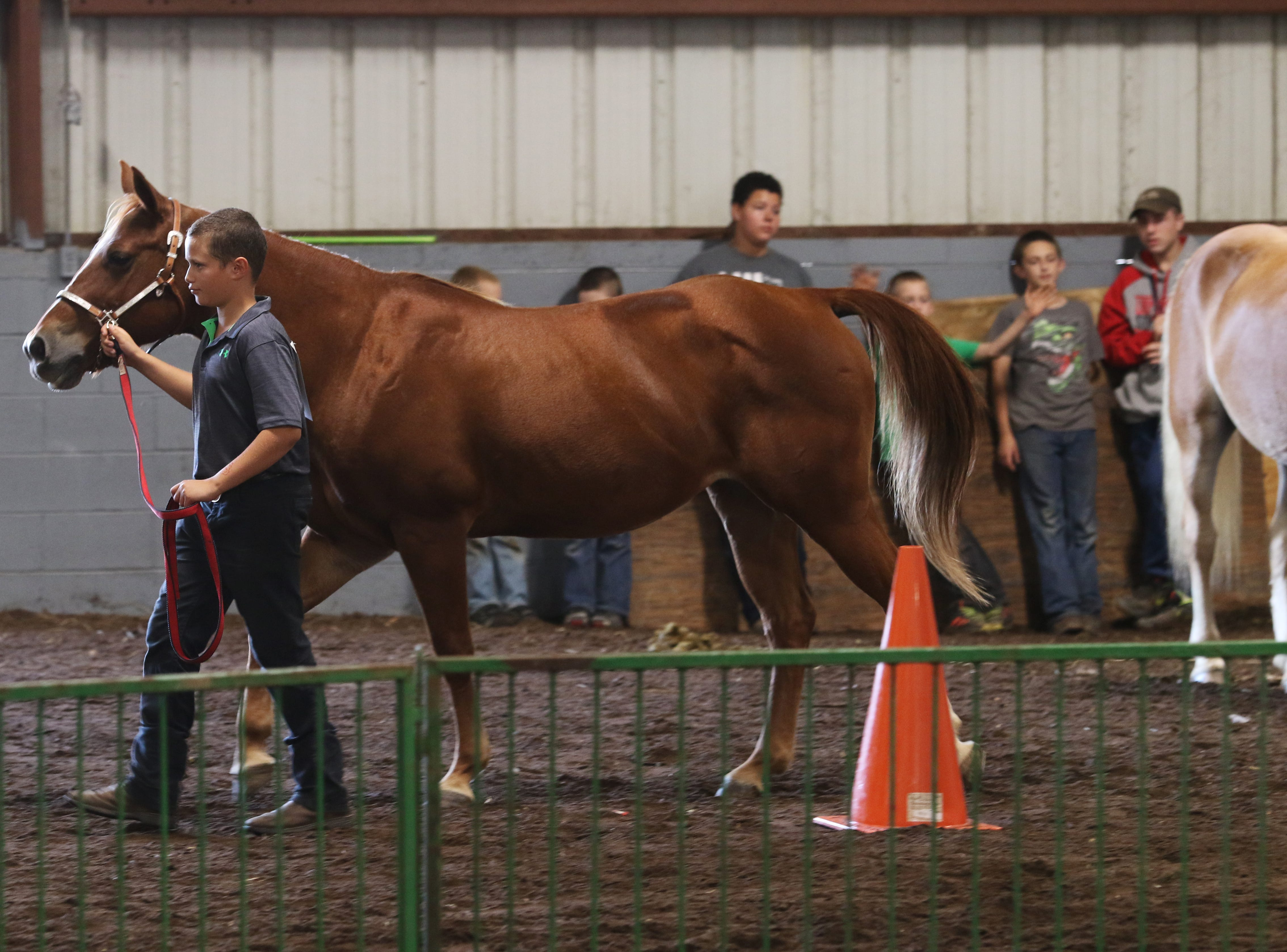 Johnathan Woodward shows a horse during the Showman of Showmen at the Coshocton County Fair on Wednesday.