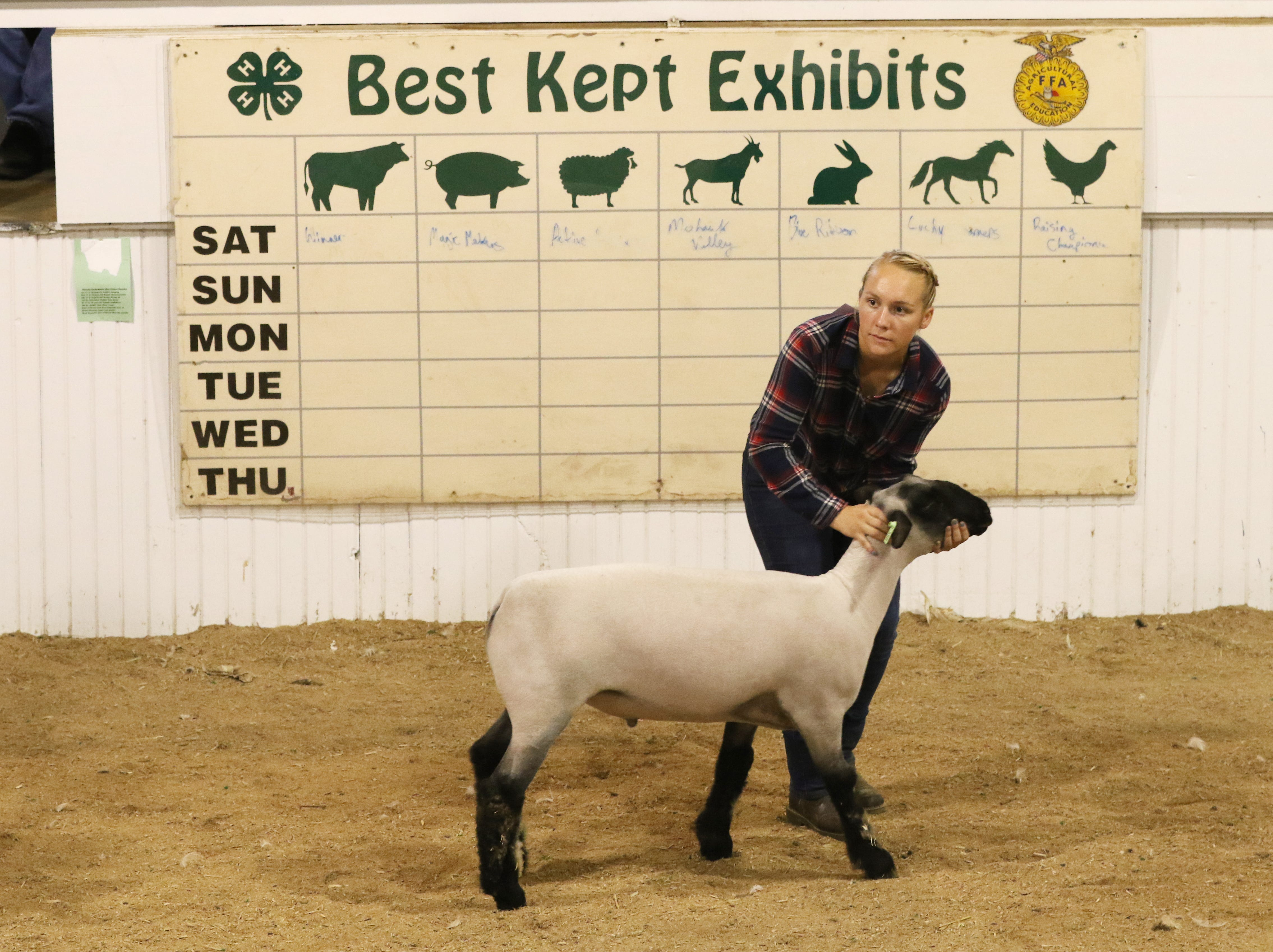Sydney Zinkon shows a lamb during the Showman of Showmen at the Coshocton County Fair on Wednesday.