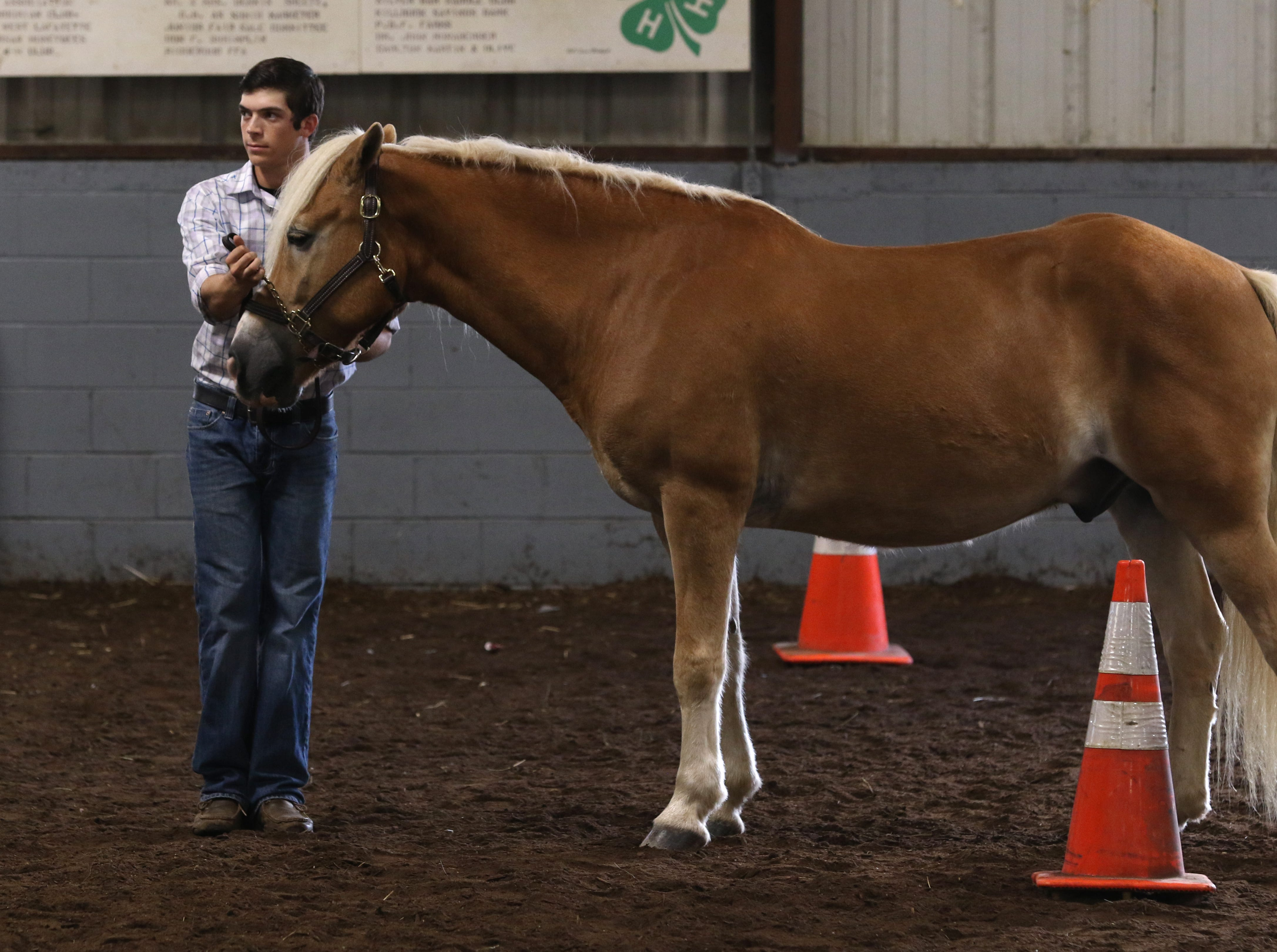 Justin Mason shows a horse during the Showman of Showmen at the Coshocton County Fair on Wednesday.
