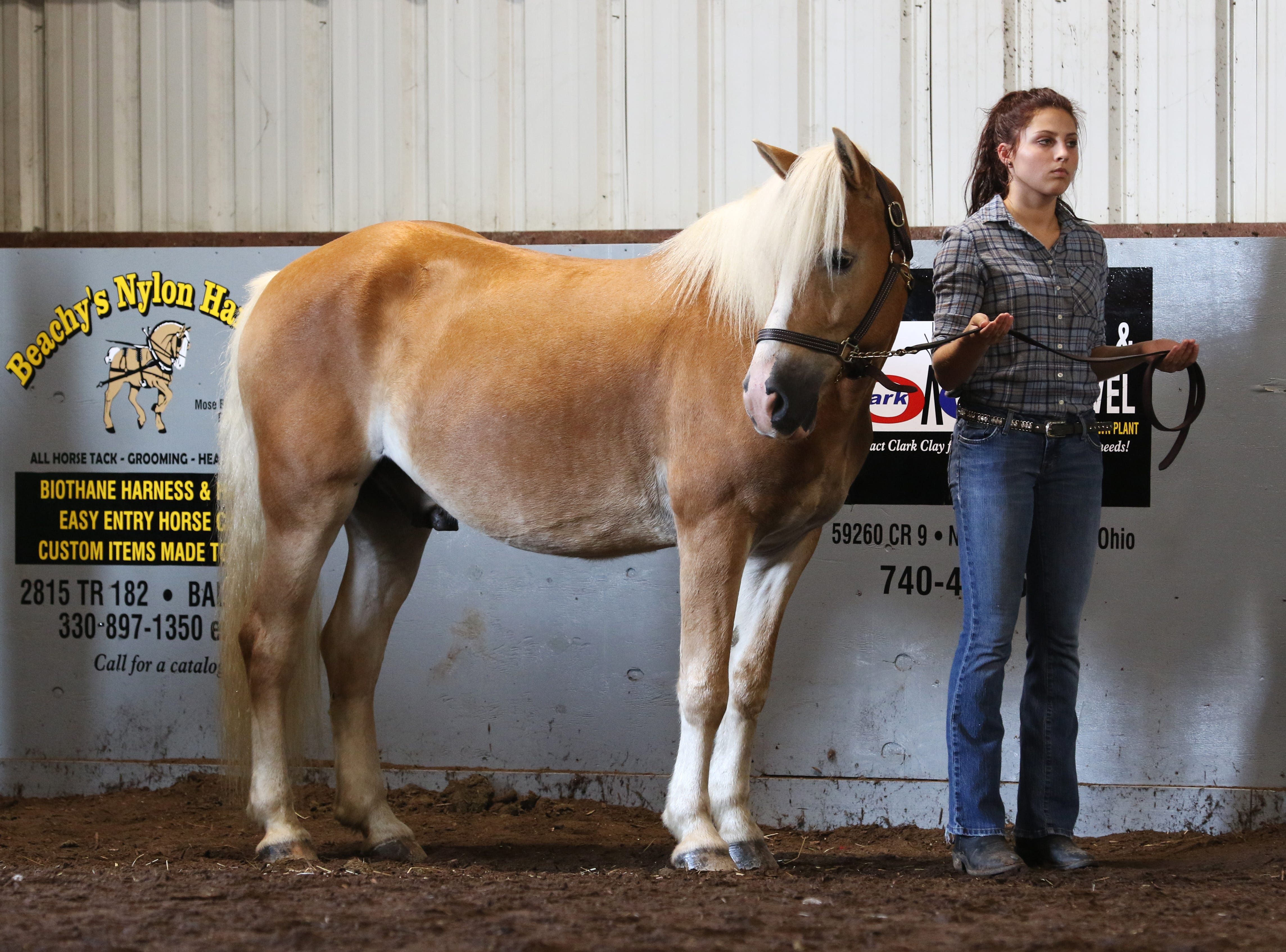 Kalie Rettos waits to show a horse during the Showman of Showmen at the Coshocton County Fair on Wednesday.