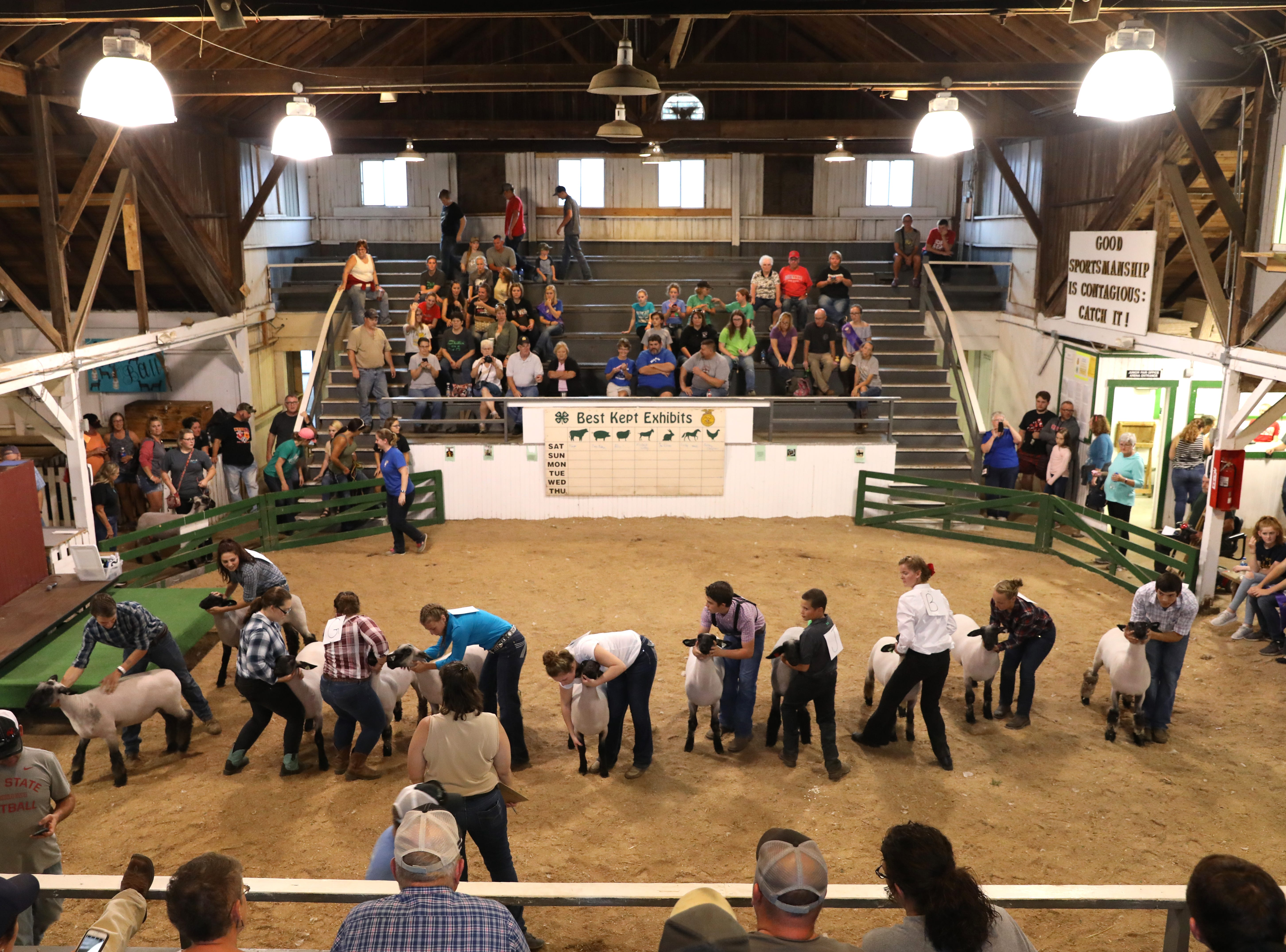 Contestants show lambs during the Showman of Showmen at the Coshocton County Fair on Wednesday.