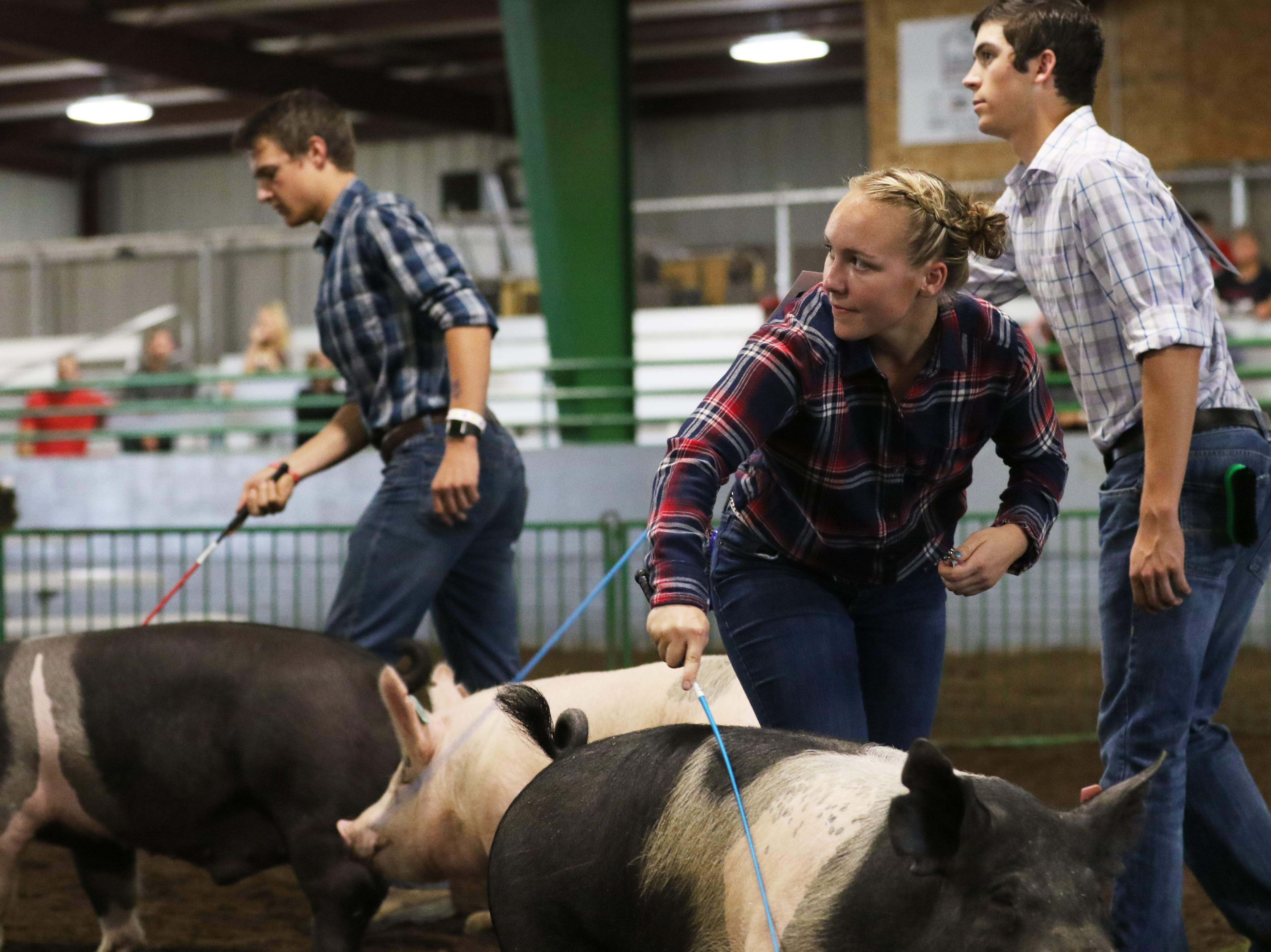 Sydney Zinkon shows a hog during the Showman of Showmen at the Coshocton County Fair on Wednesday.