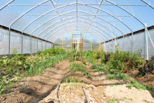 As Iowa's cooler weather creeps in, the operation takes advantage of micro-climates available through the hoop houses on Thursday, Oct. 4 on Suzan Erem and Paul Durrenberger's land northeast of Iowa City.