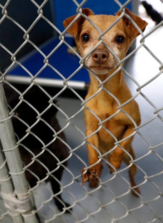 01 Lan Humane Society Dogs