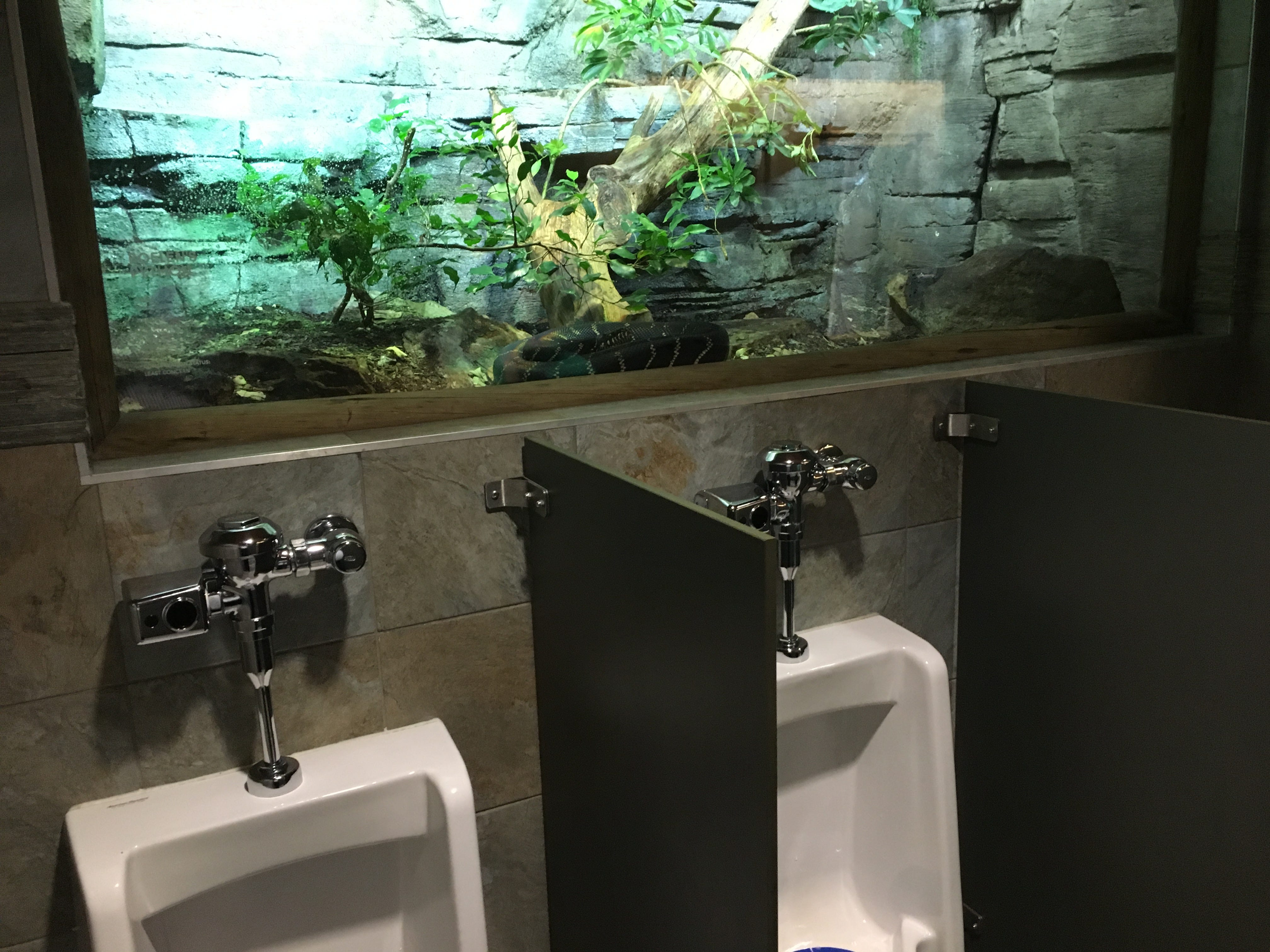 The men's room at the entrance of the Nashville Zoo has a giant snake in a tank above the urinal