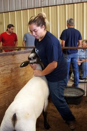 Tatumn O'Toole makes sure her goat is ready for show at the Southwestern New Mexico State Fair in Deming, NM.
