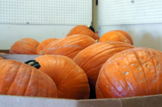 Pumpkins are a sure sign that the Southwestern New Mexico State Fair is upon Luna County.
