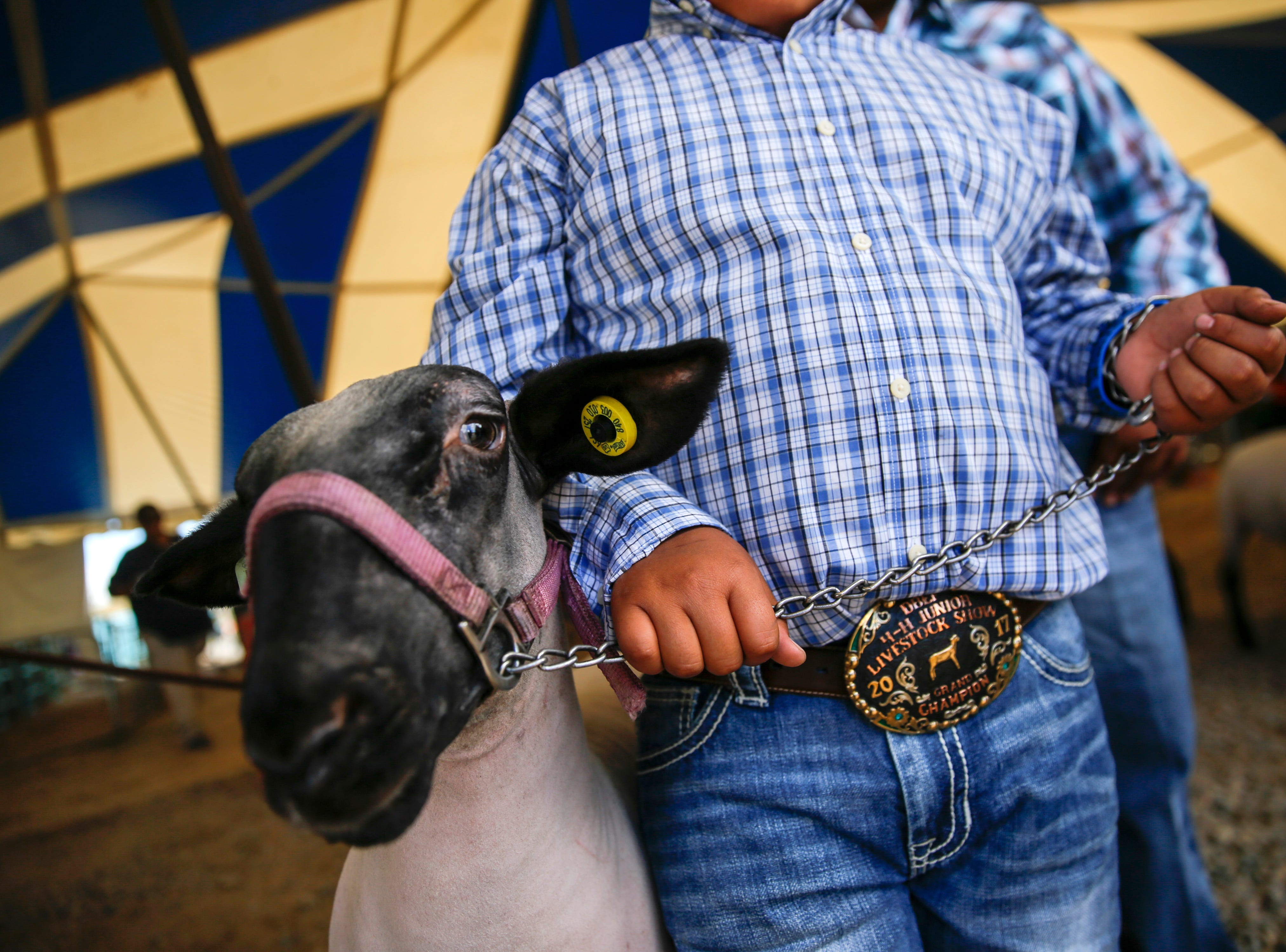 Thayda Burnside gets ready to enter to have his sheep judged in the grand championship judging event for medium sized sheep, Thursday, Oct. 4, 2018  during the Northern Navajo Nation Fair 4-H Livestock Show in Shiprock.