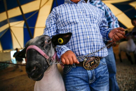 Thayda Burnside gets ready to enter to have his sheep judged in the grand championship judging event for medium-size sheep Thursday during the Northern Navajo Nation Fair 4-H Livestock Show in Shiprock.