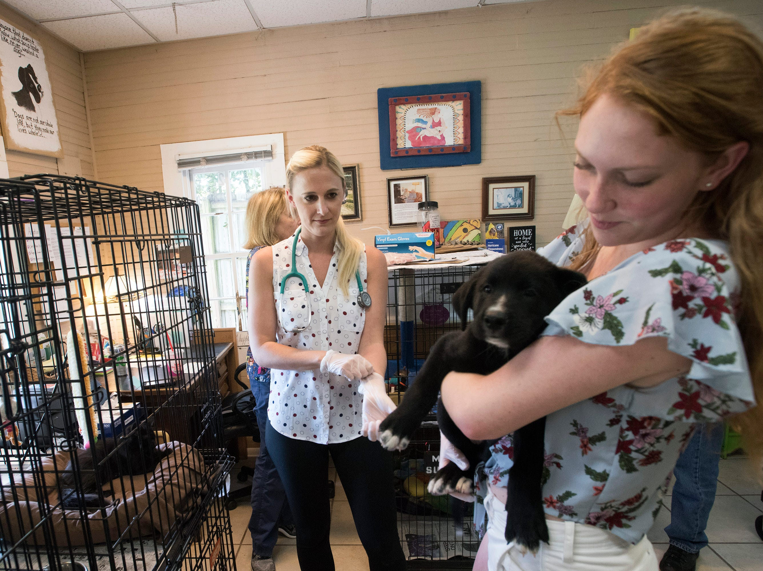 Hotel For Dogs And Cats Is An All Volunteer Shelter