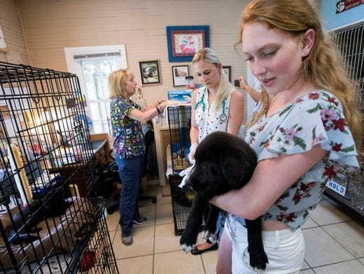 Pensacola Hotel For Dogs And Cats Needs Help Finding New Building