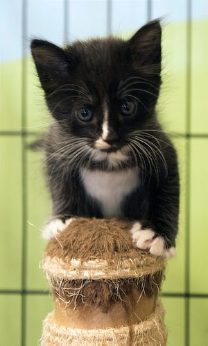 The Pensacola Hotel for Dogs and Cats  has a variety of dogs, cats, kitten and puppies ready for adoption.