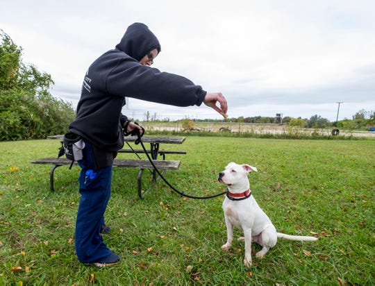St. Clair County Animal Control volunteer Amanda Decker offers a treat to Louis, an adult Pit Bull Terrier   Thursday, Oct. 4, 2018 at the shelter. Animal Control introduced an option to renew a dog license every three years, in coordination with your pet's rabies shots.