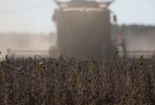 Combine Harvest Soybean