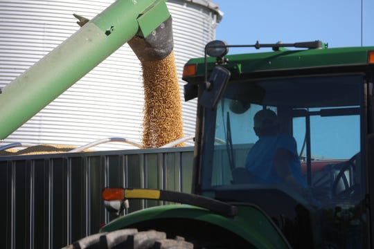 Gary Pritchard moves the soybeans from the grain buggy to a truck to be brought to a grain bin.