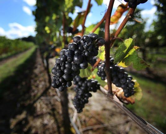 Ap Oregon Wine Claims A File F Usa Or