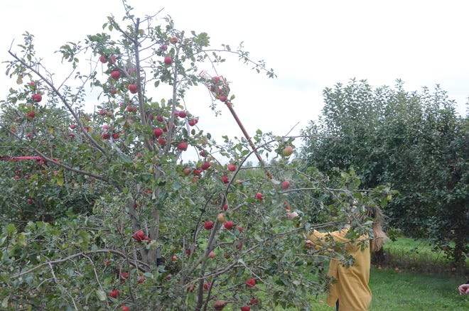 This is a busy season for Hoversten Orchard near Brandon.