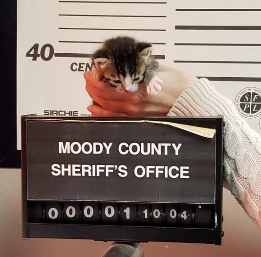 Moody County Kitten