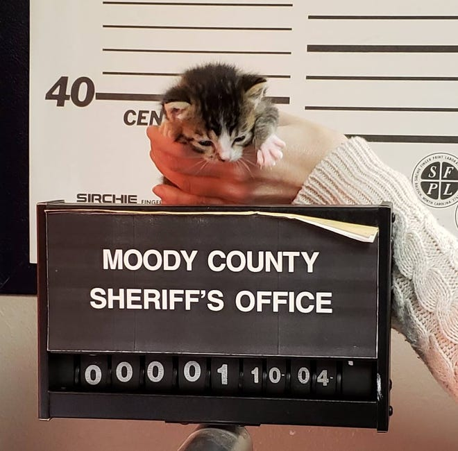 The Moody County Sheriff's Office is looking for a home for its smallest inmate.
