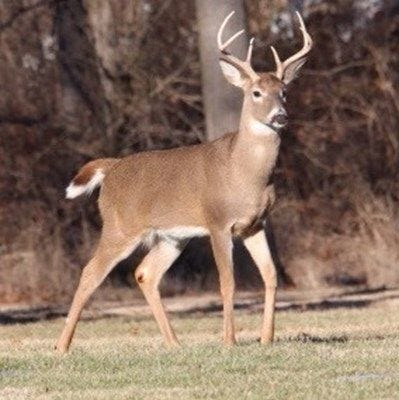 Spotting deer by shining a light at night isn't always legal in Pa. Here are the laws.
